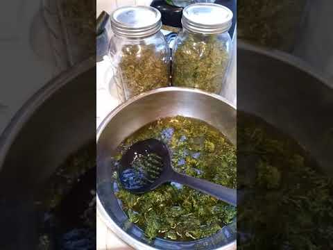 How to make cannabis oil   at your own home step 1