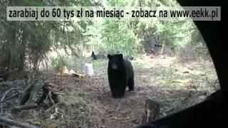 Polowanie na Niedźwiedzia - celny strzał!