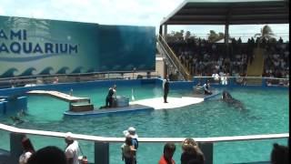Miami Seaquarium Orca Show - 18-05-2014