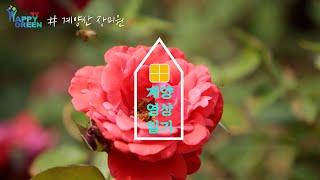 계양산 장미원 [영상일기]썸네일
