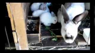 Лучшие корма для кроликов, дедушкин рецепт