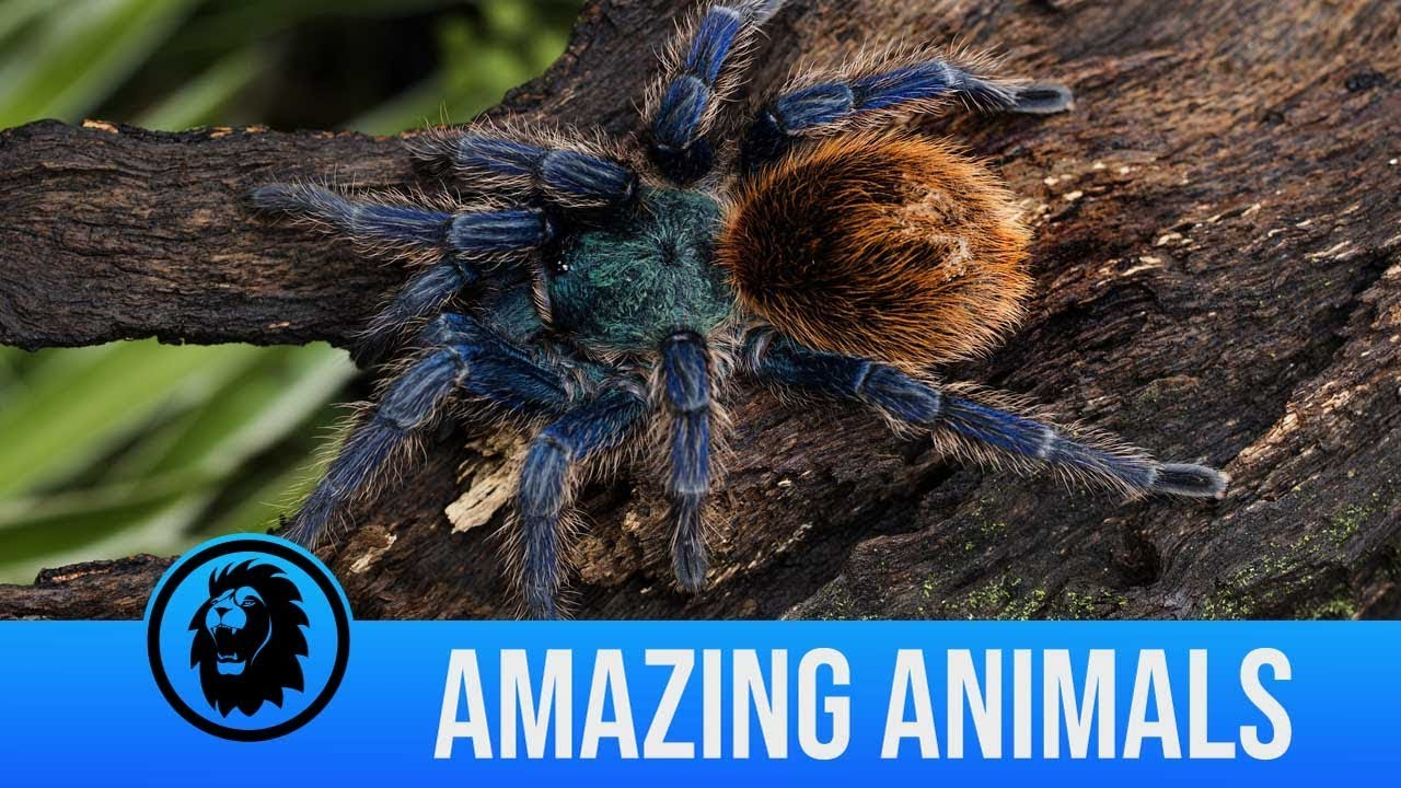 The rarest creatures caught on camera | Amazing Animals