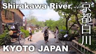 Kyoto, Walking Along Shirakawa River - From Gion to Sanjo-Higashiyama [4K] POV