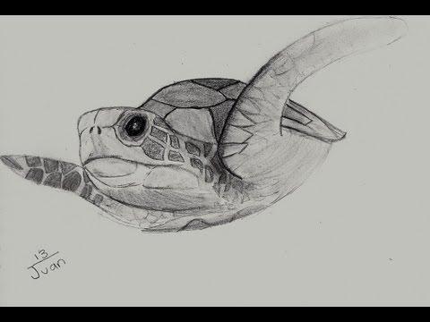 Dibujando una tortuga  YouTube