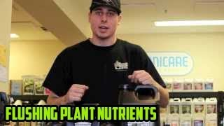 Gambar cover Best way to Flush Plants | Best Way to Flush Nutrients | Best Product Flushing Hydroponic Nutrients