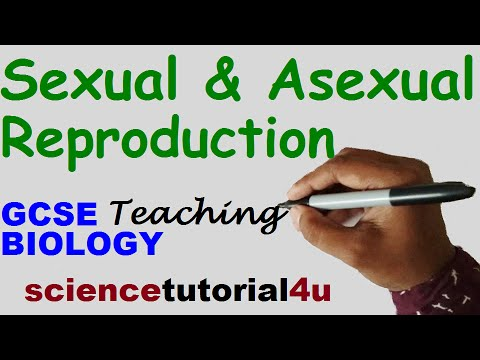 Advantages of asexual reproduction igcse center