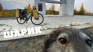 Собака бежит за мной в любую погоду и любое расстояние | Беларусь - Магадан на велосипеде. 12000 км