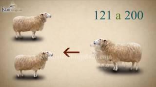 La Zakât de la bête du cheptel ( sur le bétail ) en Islam - Al Fiqh