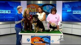 Pet Parade: Buddy Dog Humane Society In Sudbury