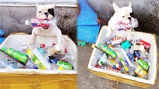 Chú Chó Có Sở Thích Ky` La Đi Tha Ra'c Thảj Nhựa Về Nhà, Thấy Chiến Lợi Phẩm Ai Cũng Choa'ng