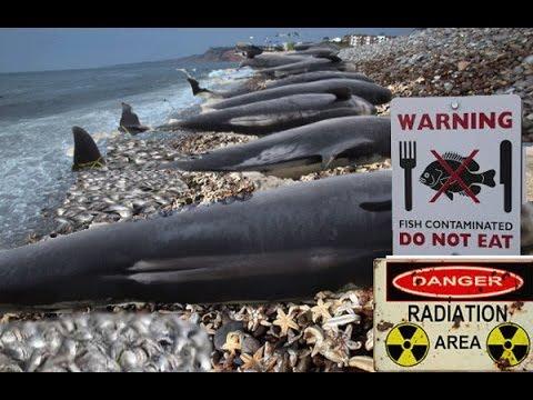 Officials Admit Fukushima Radioactive Fish Off United States West Coast !
