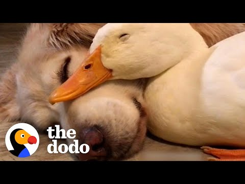 For Anyone Who Needs A Little Love This Valentine's Day | The Dodo
