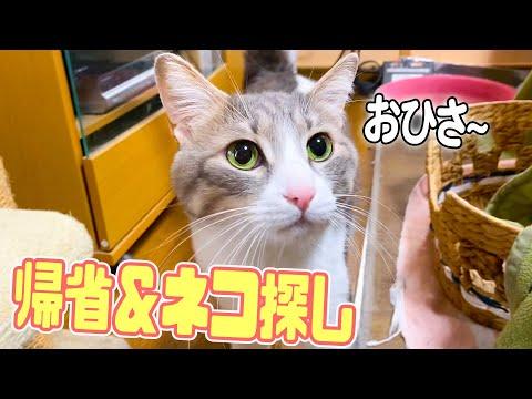 【事件】実家に帰ったら猫が1匹消えました…