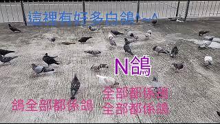 Publication Date: 2021-01-29 | Video Title: 名校 自由飛 東京街 協和小學 CCC Heep Woh P