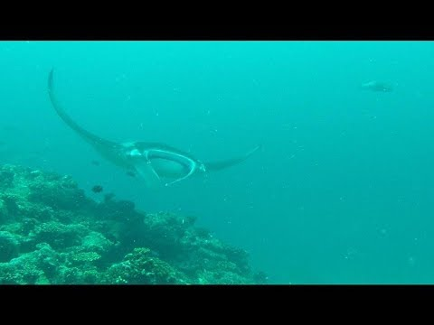 Plingding Movie Maldives Embudu Village From the air, land and underwater October 2017 HD 1080p