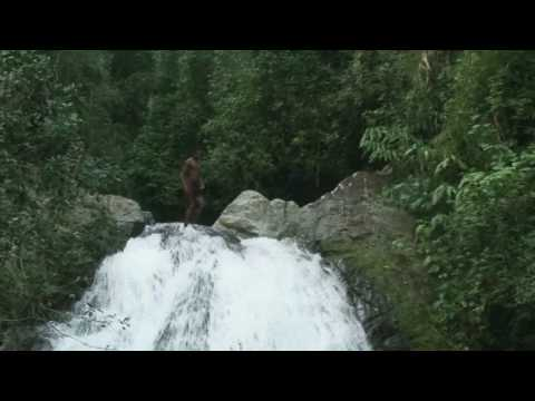 Jamaica- blue mountain