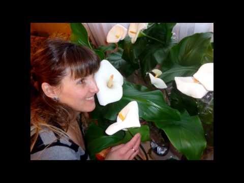 Букет из 51 белой розыиз YouTube · С высокой четкостью · Длительность: 35 с  · Просмотры: более 1.000 · отправлено: 12.10.2016 · кем отправлено: Доставка цветов Floravip