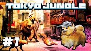 Tokyo Jungle - #1 - The Power of Pomeranians