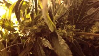 6 Plant Hydro Closet