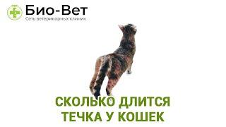 Сколько длится течка у кошек. Ветеринарная клиника Био-Вет.