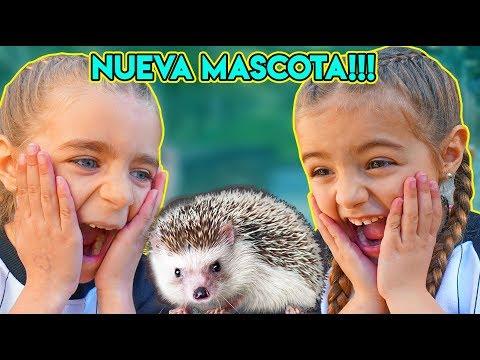 NUEVA MASCOTA!! REACCION GISELE Y CLAUDIA Al ERIZO !! ItarteVlogs