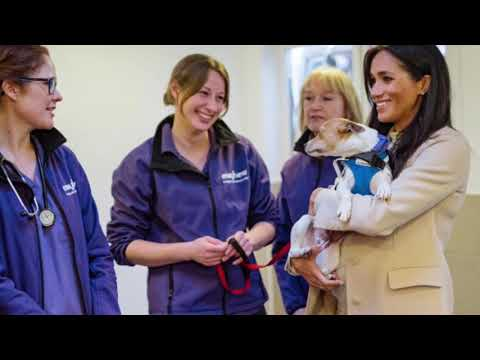 Meghan The Duchess Of Sussex Visits MAYHEW Animal Welfare charity! 2019
