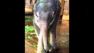 José Leão - O PASSO DO ELEFANTINHO (Baby Elephant Walk) - Henry Mancini e Ruth Blanco