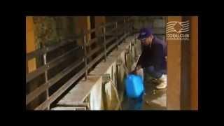 Корал-Майн / Coral-Mine - карманный фильтр для воды(http://coral-club.eu/coral-mine Корал-Майн / Coral-Mine http://coral-club.eu/ Коралловый Клуб Вода с коралловым кальцием Корал-Майн..., 2012-11-25T02:24:30.000Z)
