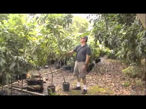 Bill Mee's Tour of the Lychee Grove