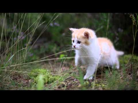 Отдадим рыжего котёнка в добрые руки
