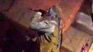 Gigatron - Viva El Calimocho