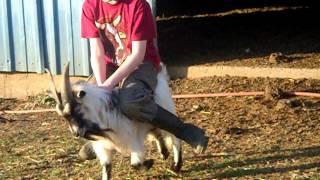 Goat Riding(: