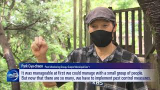 STICK INSECTS TAKE OVER MOUNTAINS (News Today) l KBS WORLD TV 210722