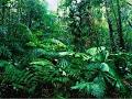 Secrets Of The Mediterranean RainForest Documentary 2017