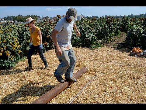 The Farm Workout