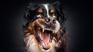 Dog Barking Video For Dogs To Watch  Puppies Barking Compilation
