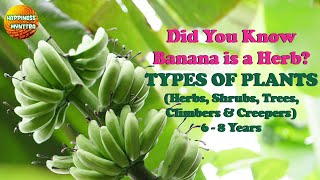 Did you know Banana Plant is a Herb?   Types of Plants screenshot 4
