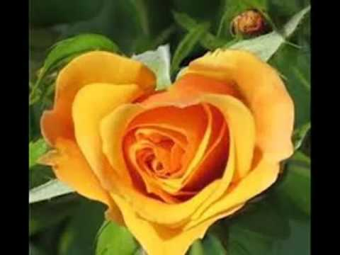 Les plus belle fleurs du monde en photos youtube youtube - Plus belle fleur du monde ...