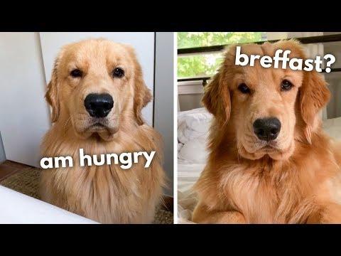 my-dog-begs-for-breakfast
