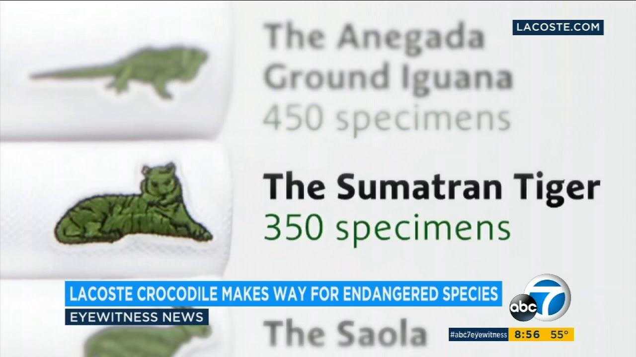 Lacoste Putting Aside Alligator Logo On Polo Shirts Abc7 Youtube
