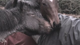 Horses Immediately Recognize Each Other After 4 Years Apart