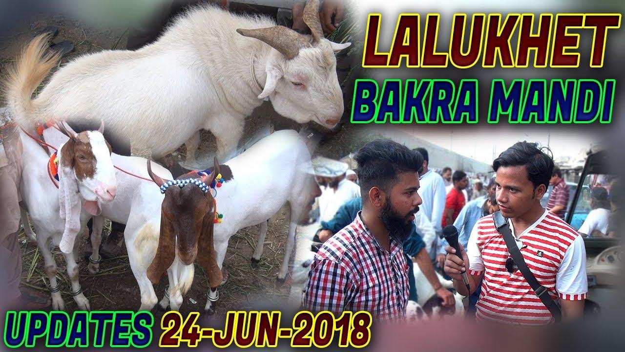 Lalukhet Bakra Mandi 24-June-2018 Decent goat for sale Jamshed Asmi  Informative Channel (Urdu/Hindi