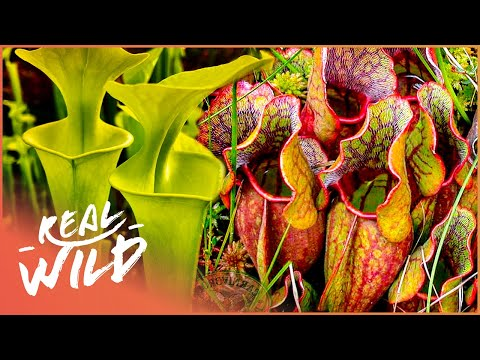 Earth's Most Unbelievable Plants   Wild America   Real Wild