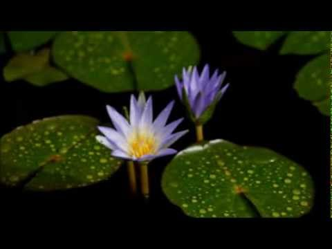 Pivithuru Sithin Enu Mana Lande - පිවිතුරු සිතින් එනු මැන ළඳේ