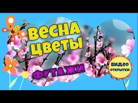 Футажи для фона. Весна цветы май. Анимированный фон. Футаж фон для видео монтажа. Скачать бесплатно.