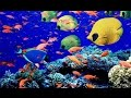 Underwater Animals - Beautiful Fishes In Indian Ocean, Maldives - Snorkeling in Maldives