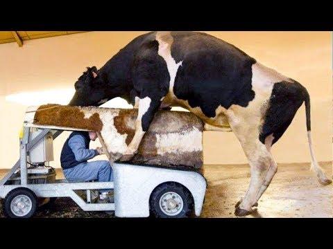Intelligent Technology Smart Farming Automatic Cow Milking Machine, Feeding, Cleaning, Washing