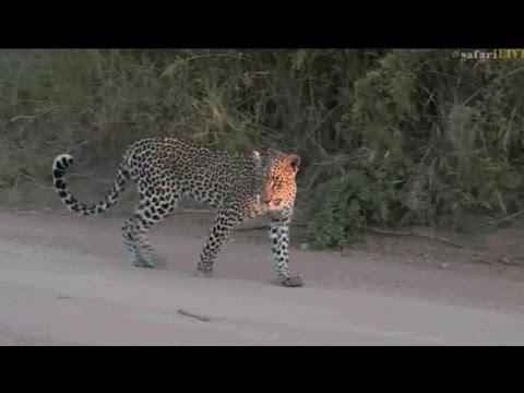 Pt 2 Safari Live's Sunset Safari Drive at 5:00 PM on April 01, 2017 ( Xongile )