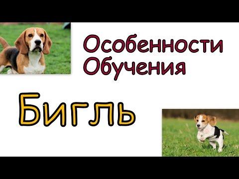 знакомство щенка и взрослого кота