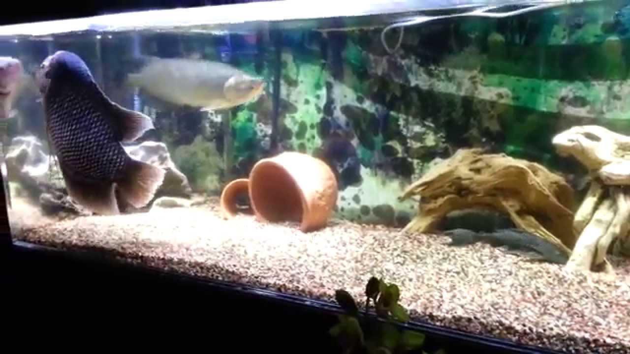 Fish in big aquarium - Fish In Big Aquarium